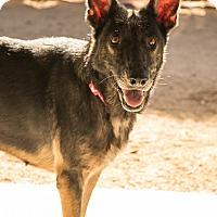 Adopt A Pet :: Babe - Phoenix, AZ