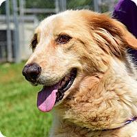 Adopt A Pet :: Olivia - New Canaan, CT