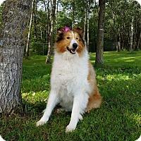 Adopt A Pet :: Louise aka Lassie - Chippewa Falls, WI