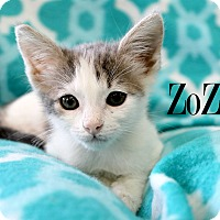 Adopt A Pet :: ZoZo - Wichita Falls, TX