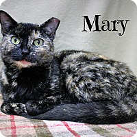 Adopt A Pet :: Mary - Melbourne, KY