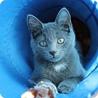 Adopt A Pet :: Doli - Rochester Hills, MI