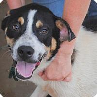 Adopt A Pet :: Dino - Anniston, AL