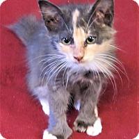 Adopt A Pet :: Polyanna - Gonzales, TX