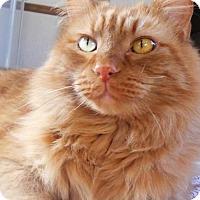 Adopt A Pet :: Reese - Siren, WI