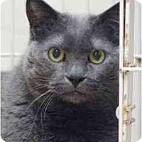 Adopt A Pet :: Swizzle - Norwalk, CT