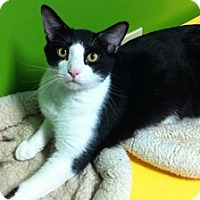 Adopt A Pet :: Mr. T - Topeka, KS