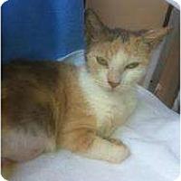 Adopt A Pet :: Amelia - Fort Lauderdale, FL