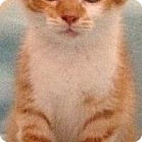 Adopt A Pet :: Hilton - Simpsonville, SC