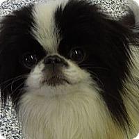 Adopt A Pet :: Tommy - Washington, PA