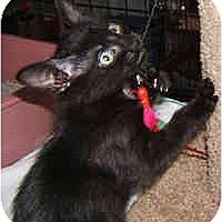 Adopt A Pet :: Night Walker and Balck Star - Dallas, TX
