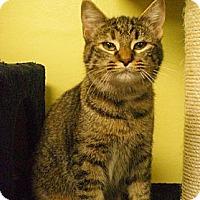 Adopt A Pet :: Julianna - Byron Center, MI