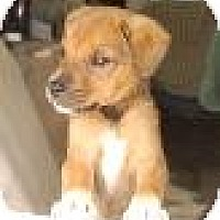 Adopt A Pet :: Baby Max - Marlton, NJ