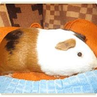 Adopt A Pet :: *Urgent* Arthur - Fullerton, CA
