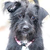 Adopt A Pet :: Tulipa-MEET HER! - Norwalk, CT