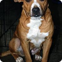 Adopt A Pet :: Darla - Torrance, CA