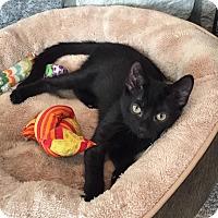 Adopt A Pet :: Mo - Berkeley Hts, NJ