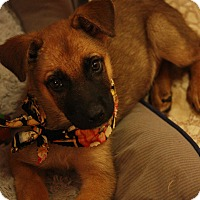 Adopt A Pet :: Raymond - Brattleboro, VT