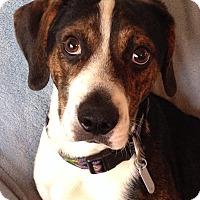 Adopt A Pet :: Caleb - Albemarle, NC