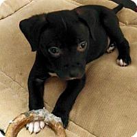 Adopt A Pet :: Samuel - Baton Rouge, LA