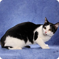 Adopt A Pet :: Stripe - Seminole, FL