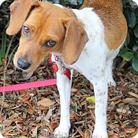 Adopt A Pet :: Cordelia - Tampa, FL