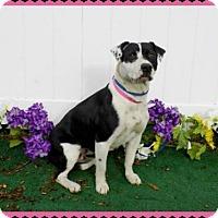 Adopt A Pet :: Chloe - Lebanon, ME