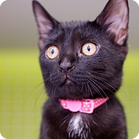 Adopt A Pet :: Dixie - Troy, MI