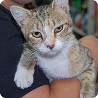 Adopt A Pet :: Corazon - Brooklyn, NY