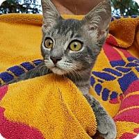 Adopt A Pet :: Doodle Bug - Scottsdale, AZ