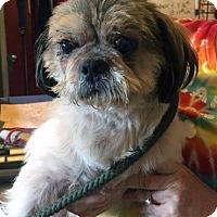 Adopt A Pet :: Rambler - Matawan, NJ