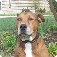 Adopt A Pet :: Bones - LaGrange, KY