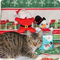 Adopt A Pet :: Bruce - Stockton, CA