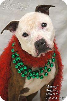 American Staffordshire Terrier Mix Dog for adoption in Newnan City, Georgia - Barney