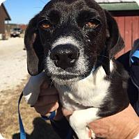Adopt A Pet :: Anna and Elsa (bonded pair) - Albany, NY