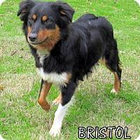 Adopt A Pet :: Bristol (Ritzy) - Lindsay, CA