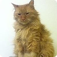 Adopt A Pet :: Hercules - Colorado Springs, CO