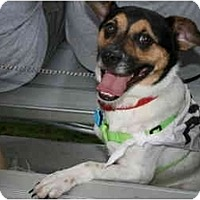 Adopt A Pet :: Levi - Kingwood, TX