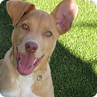 Adopt A Pet :: Pierce - Meridian, ID