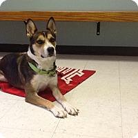 Adopt A Pet :: Zena - East Sparta, OH