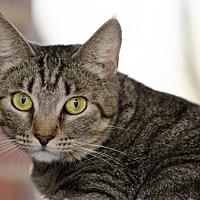Adopt A Pet :: Mama Ladybug141565 - Atlanta, GA