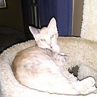 Adopt A Pet :: Glory - Loganville, GA