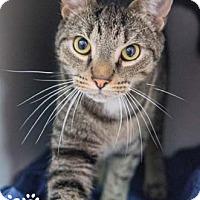 Adopt A Pet :: Jesse - Merrifield, VA