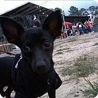 Adopt A Pet :: Chico - Daleville, AL