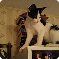 Adopt A Pet :: MJ - McDonough, GA