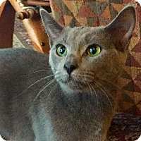 Adopt A Pet :: Bullseye - Buford, GA