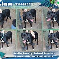 Adopt A Pet :: Liam - Willingboro, NJ