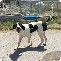 Adopt A Pet :: Republic - Lewisburg, TN