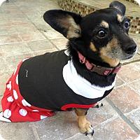 Adopt A Pet :: Duckee (BH) - Santa Ana, CA
