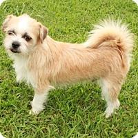 Adopt A Pet :: Wheaton - Foster, RI